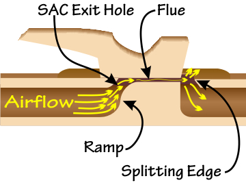 Cut-away image of a Native American flute, showing the SAC exit hole, airflow, ramp, flue, and splitting edge